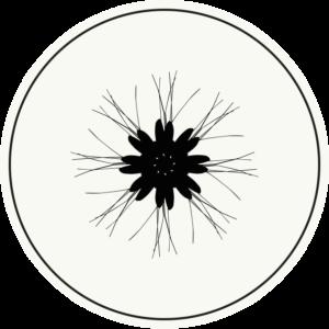 Zierdeckel | Schnake 02